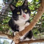katten-link